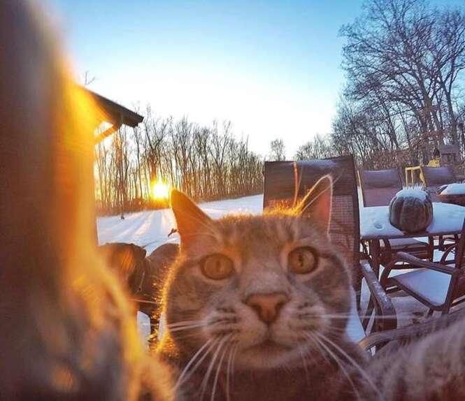 Conheça o gato que entende mais de selfies que você