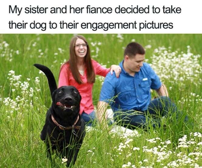 Vezes em que cães estragaram fotos que ficariam perfeitas
