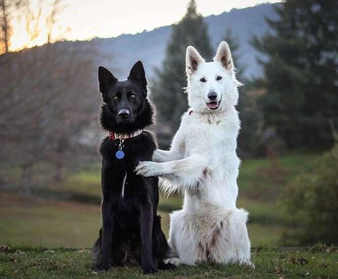 """As fotos do """"casamento"""" destes cães farão o seu dia melhor"""