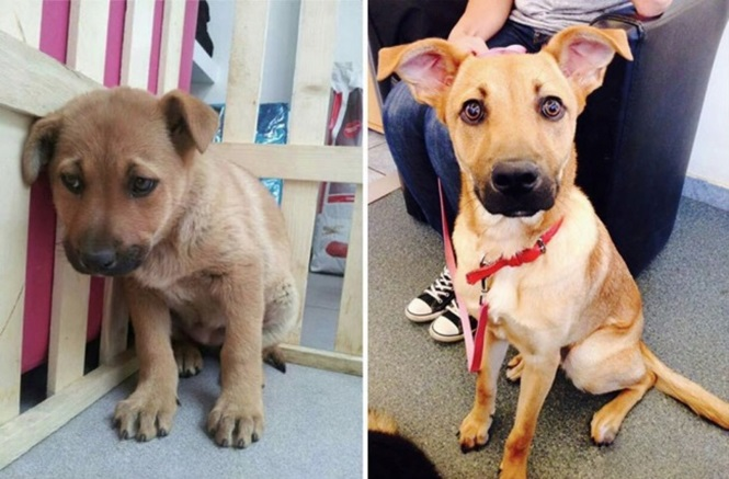 Bichos antes e depois de serem adotados