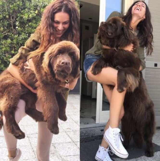 Cães grandes demais