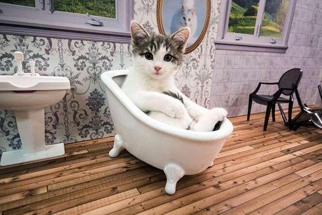 Conheça o novo reality show de gatos da Islândia