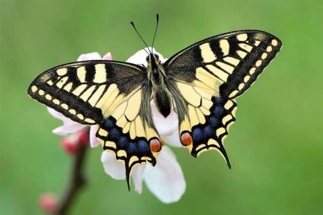 Mariposas lindas e únicas
