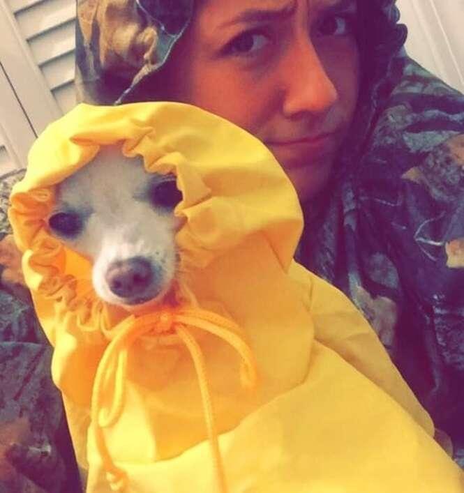 Essa universitária substituiu fotos dos familiares por fotos de seu cachorro e o resultado vai te matar de rir