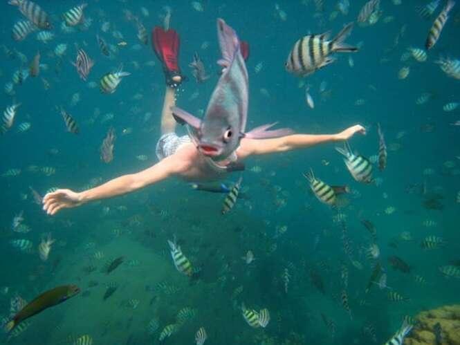 Animais estragando fotos alheias