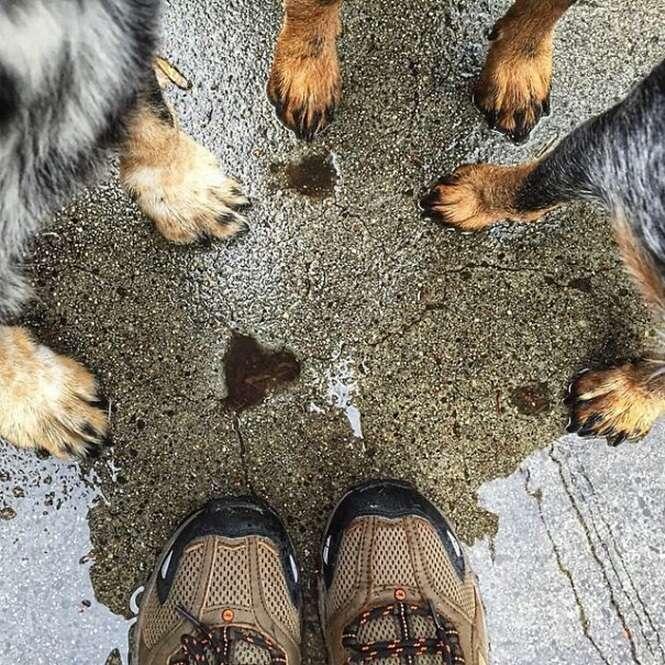 Imagens que podem lhe inspirar a acampar com seu cão