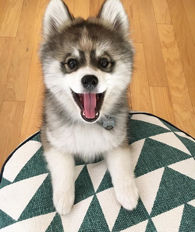 Foto: normanthepomsky