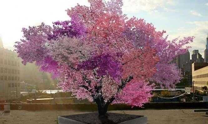 Conheça a incrível árvore que dá mais de 40 frutas diferentes