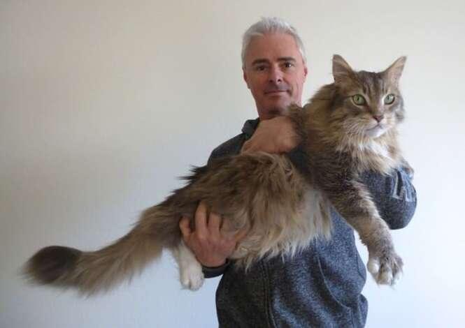 Gatos tão grandes que vão te chocar
