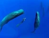 Fotógrafo registra momentos raros de baleias cachalotes dormindo