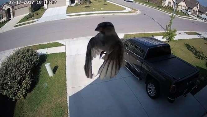 O vídeo em que este pássaro parece levitar vai mexer com sua mente