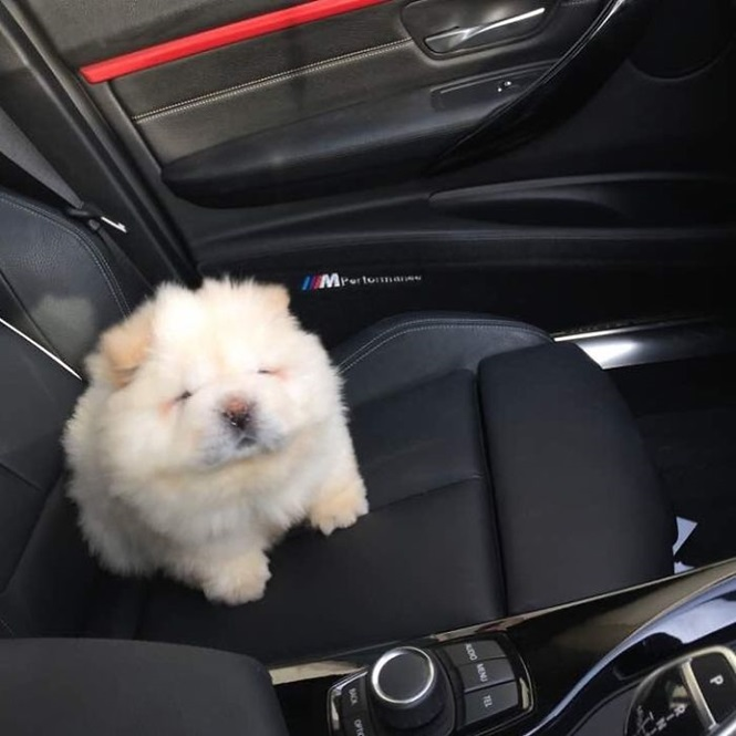 As fofas fotos deste cachorrinho adorável vão derreter o seu coração