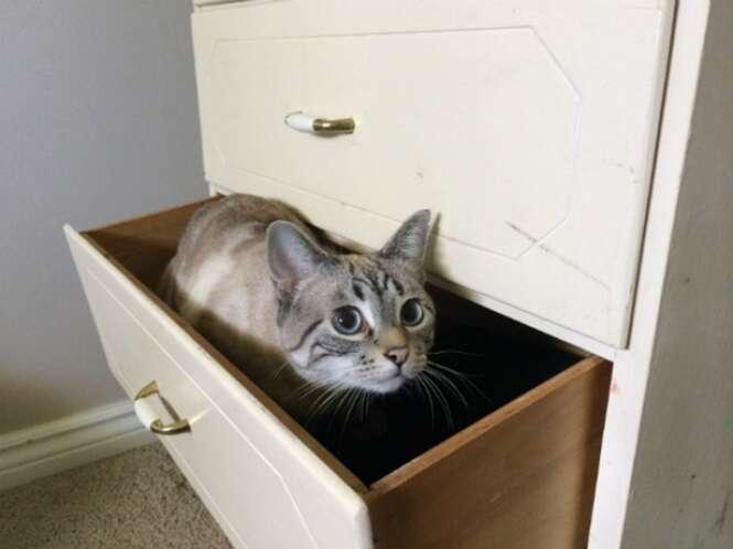 Locais pouquíssimo prováveis onde podemos encontrar nossos gatos