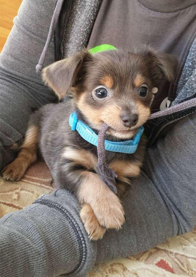 Cãezinhos fofos demais para serem de verdade