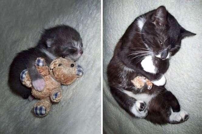 Antes e depois de animais crescendo com seus brinquedos