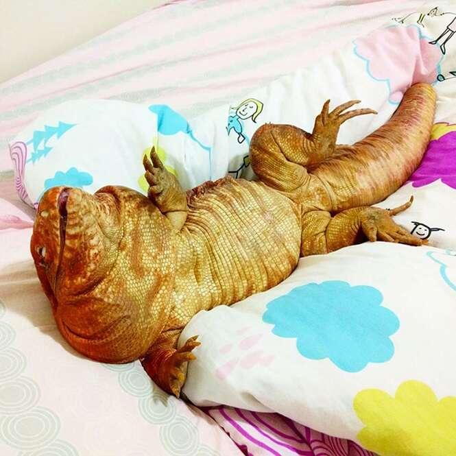 Este lagarto tratado como um cãozinho é sensação no Instagram e as imagens dele vão tornar seu dia ainda melhor