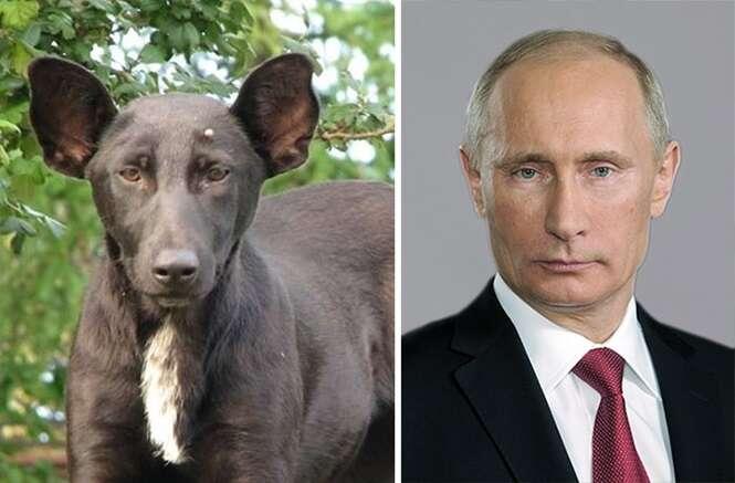 Animais que se parecem com pessoas bem conhecidas