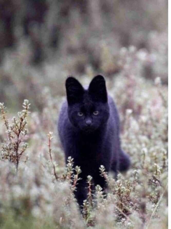 Animais que ganharam um toque de sutileza e elegância com a cor preta