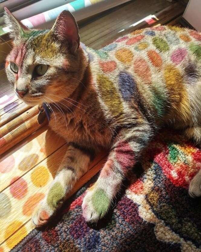 Gatos que amam tomar sol