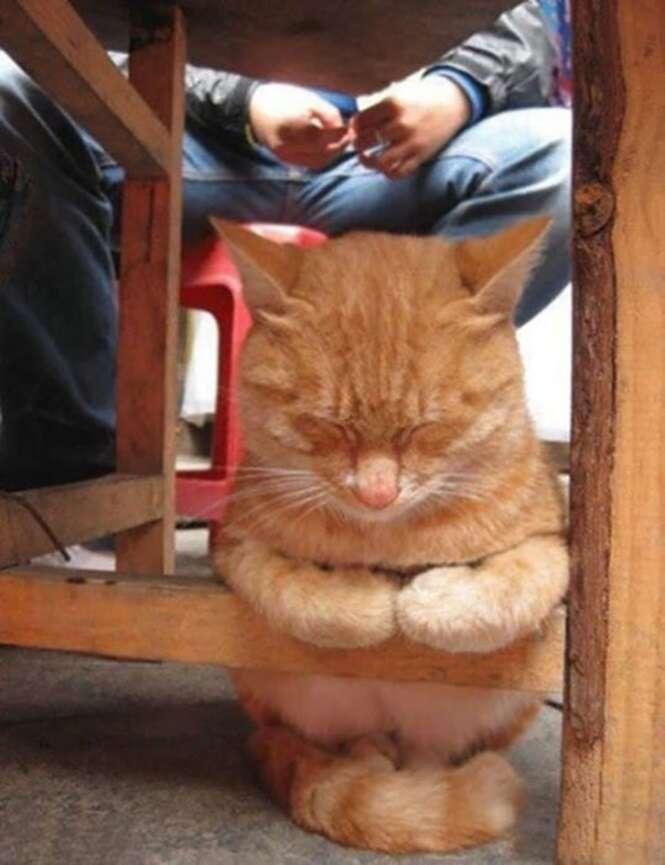 Gatos que conseguem dormir em qualquer lugar