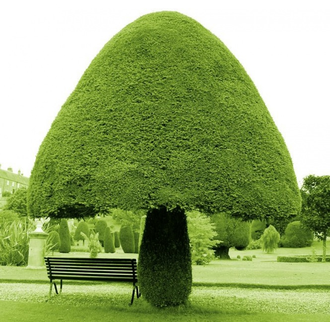 Árvores que não parecem ser deste planeta