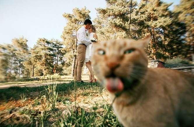 Vezes em que gatos arruinaram fotos alheias