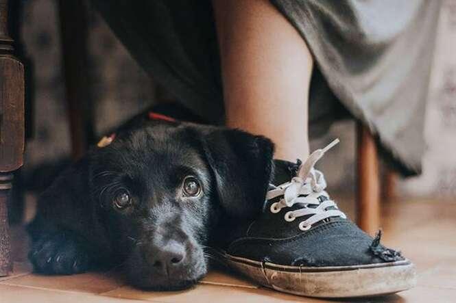 As melhores fotos deste ano de cães, segundo premiação