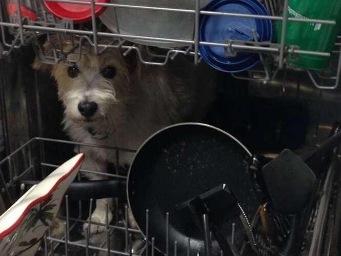 Cãozinho que sabe se esconder