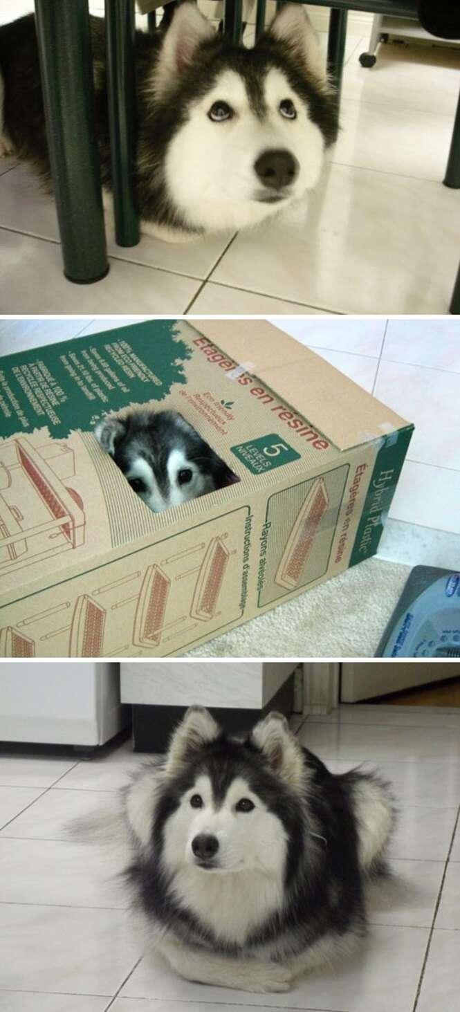 Cães que pensam que são gatos