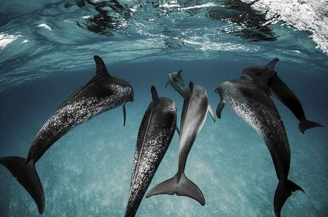 Fotos deslumbrantes para nos lembrar de que vale a pena cuidar dos oceanos