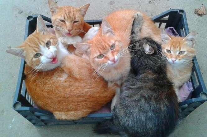Gatos que se meteram nos lugares menos esperados