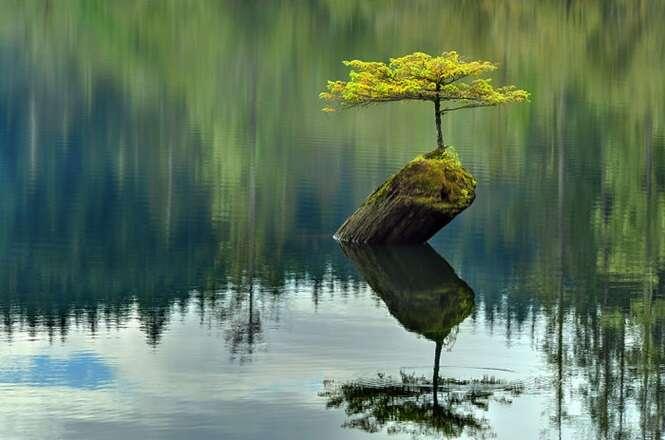 Árvores que se recusaram a morrer, não importam as circunstâncias