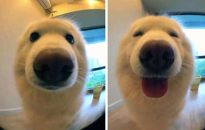 """Reações adoráveis de cães depois de terem sido chamados de """"bom menino"""""""