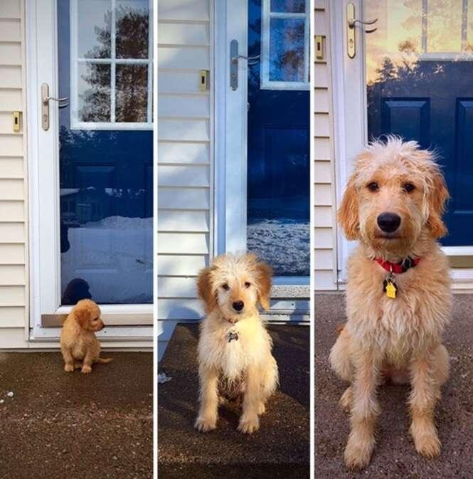 Cachorros que duraram pouco tempo pequenos
