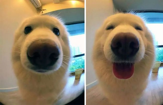 """Animais antes e depois de terem sido chamados de """"bom menino"""""""