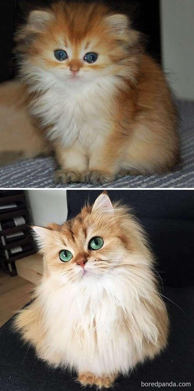 Antes e depois de gatos lindos