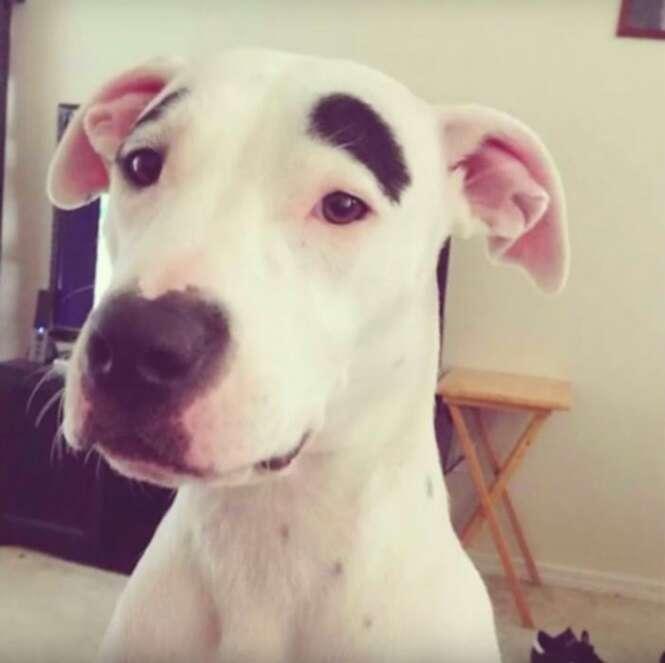 Cães com marcas de nascença bem incomuns