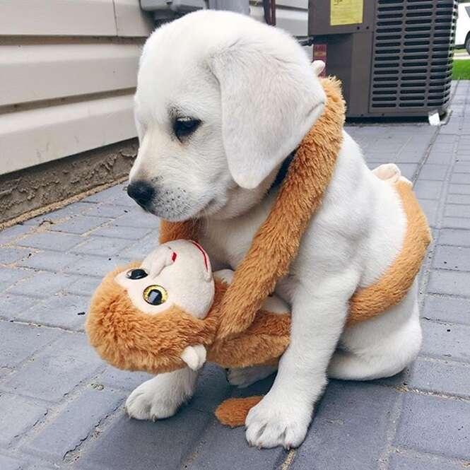 Cães que vão melhorar o seu dia