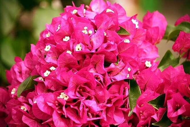 Muita gente só usa esta flor como parte da decoração porque não sabe que ela é capaz de curar várias doenças