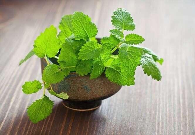8 benefícios que o chá de erva-cidreira tem