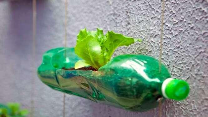 Estes 12 alimentos podem ser cultivados em garrafas pet