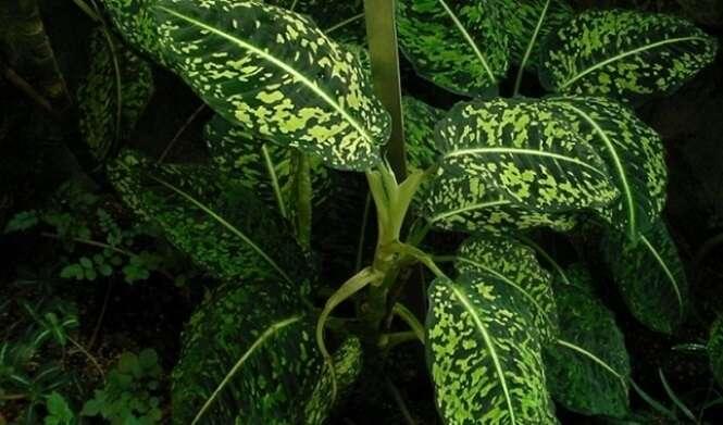 Esta planta pode acabar com a vida de um adulto em apenas 15 minutos e com a de uma criança em ainda menos tempo