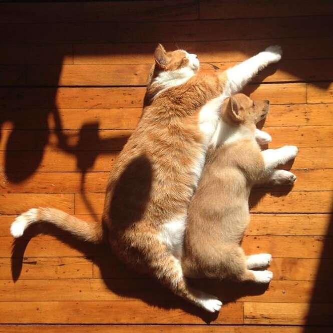 Gatos adoráveis que vão te ensinar a tomar sol