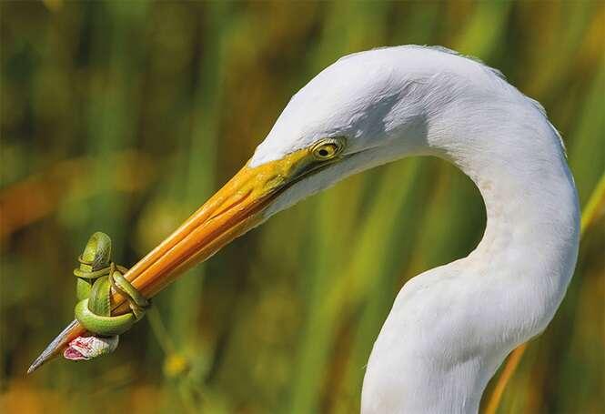 As melhores fotos de pássaros de 2017