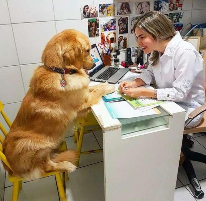 Fotos de cães as quais será impossível ficar indiferente