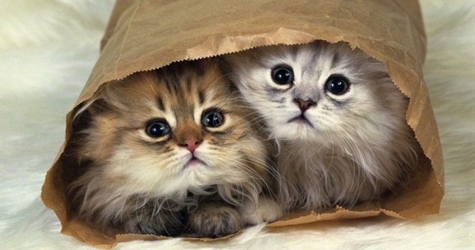 Gatinhos fofos que se meteram em locais inesperados
