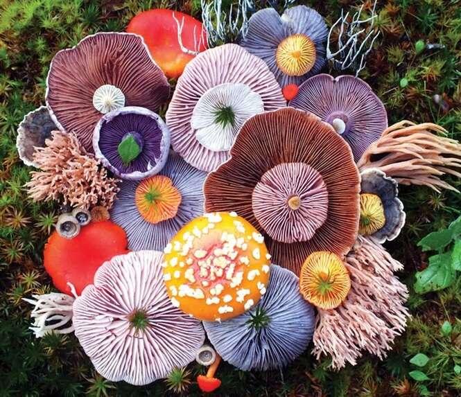 A mágica beleza dos cogumelos registrada em 10 fotos coloridas