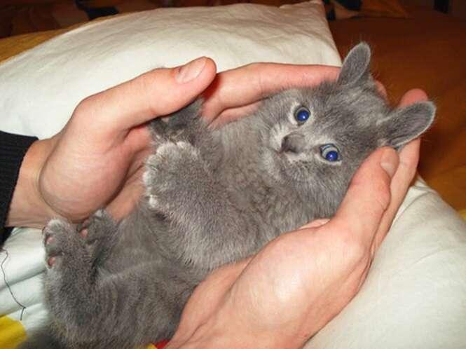 Imagens que te farão querer ter um gato