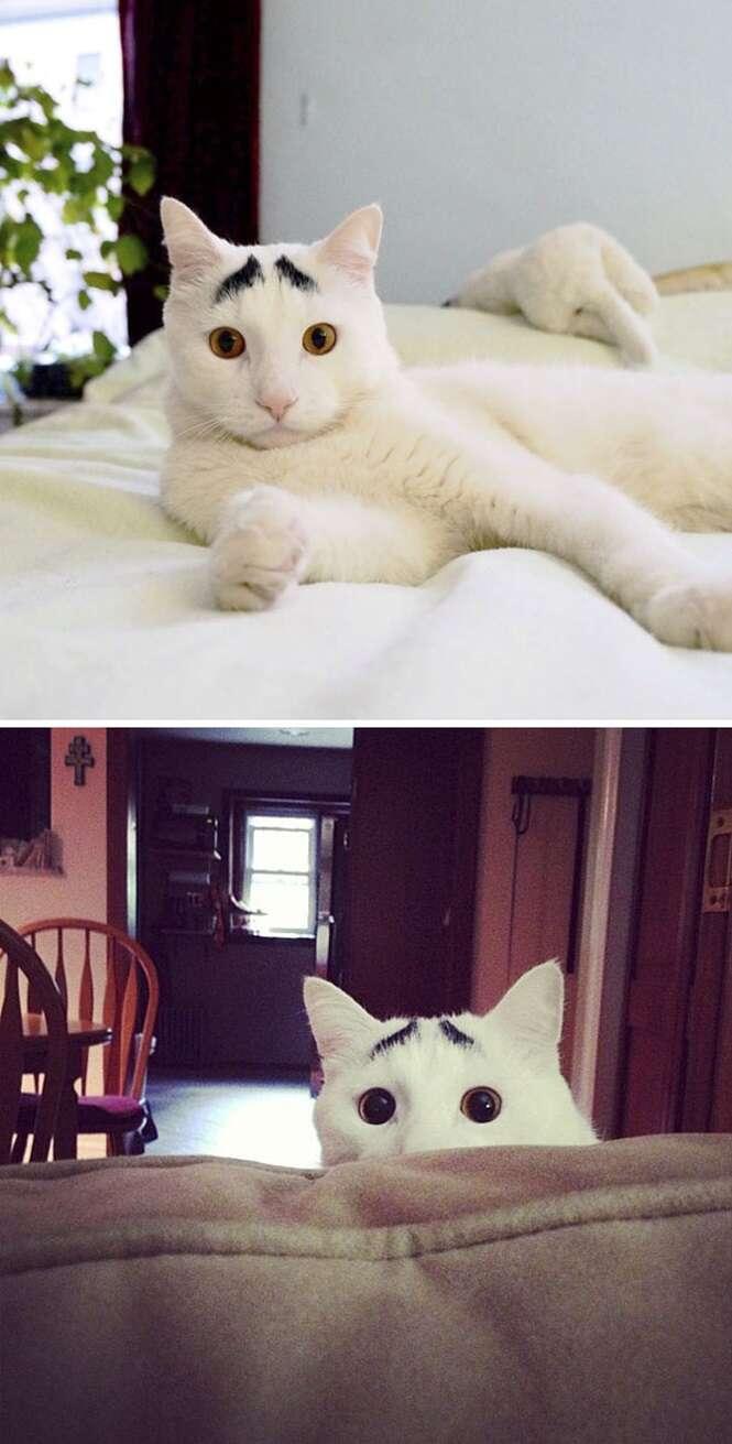 gatos com marcas das mais surpreendentes que você já viu