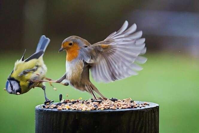 Pássaro bate no amigo e desencadeia hilária batalha de Photoshop na Internet